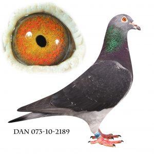DAN073-10-2189 Van der Wegen. Stamhun