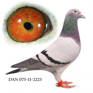 DAN073-11-2223 Brøbech/Janssen. Barnebarn af nr. 2