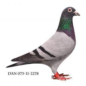 DAN073-11-2278 Søster til nr. 3 Nat. Karlsruhe