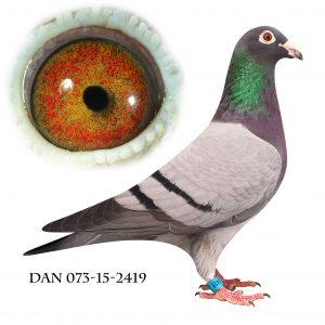DAN073-15-2419 Blå Brøbech. Barnebarn af nr. 2 og 702