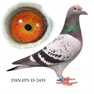 DAN073-15-2435 Jos De Klak. Barnbarn af 613