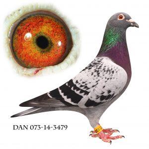 DAN073-14-3479 Janssen/Klak Barnbarn af 613
