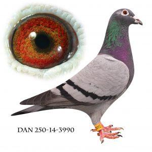 DAN250-14-3990 Datter af 702