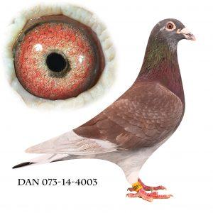 DAN073-14-4003 Janssen. Dark Red