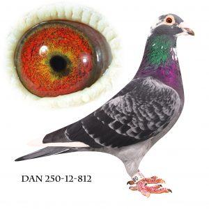 DAN250-12-812. New #812# Søn af 848 og 847