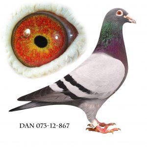DAN073-12-867. Søn af 702. Dobbelt barnebarn af 812