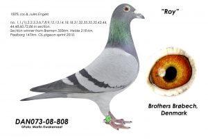 DAN073-08-808 Flor Engels. Sektionsvinder, Top avler.