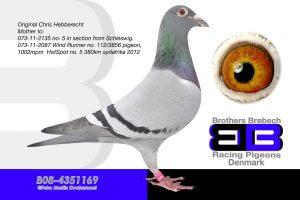 Bel-08-4351169 Hebberecht. Super avlshun