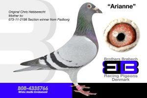 """Bel-08-4335766 """"Arianne"""""""