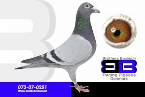 07-0251 (1024x683)