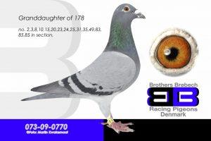 DAN073-09-770