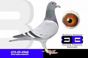 DAN073-09-968