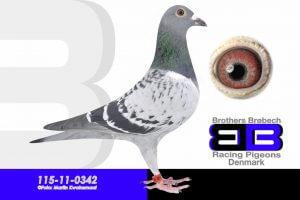 BEL-11-4024569