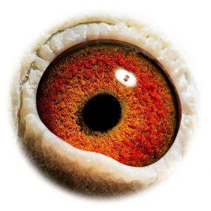 DAN073-09-846_eye