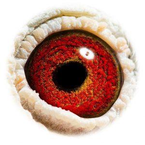 DAN073-09-90_eye