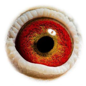 DAN073-10-2662_eye