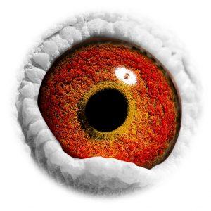 DAN073-10-2704_eye