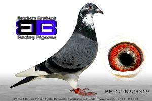 BEL-12-6225319