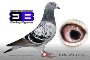 DAN073-12-267 Sektionsvinder Antwerpen