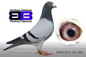 DAN073-04-487 Søn af nr. 2