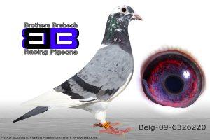 BEL-09-6326220 #Wittekop#