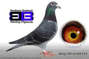 Bel-08-6166345
