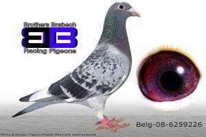 BEL-08-6259226 Org. Geerinckx