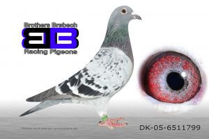 DK-05-6511799 Super avlshun