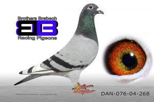 DAN076-04-268
