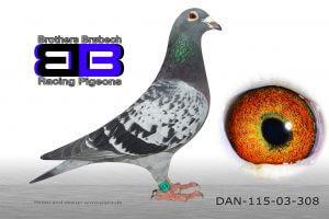 DAN115-03-308 Stamhun
