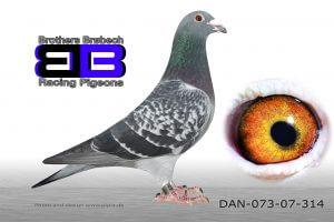 DAN073-07-314 Superavler