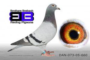 DAN073-05-660 Stamhun. Datter af 93-2