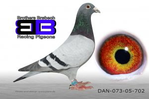 DAN073-05-702 Stamhan