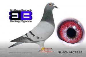 NL-03-1407998