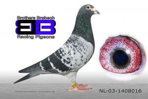 NL-03-1408016