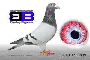 NL-03-1408039