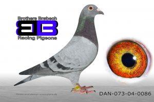 DAN073-04-86