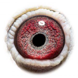 NL08-1858016_eye - Kopi
