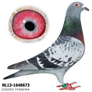 NL-13-1648673