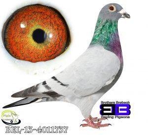 BEL-13-4011737
