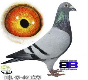 BEL-13-4011753