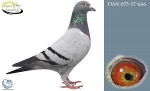 DAN073-17-666