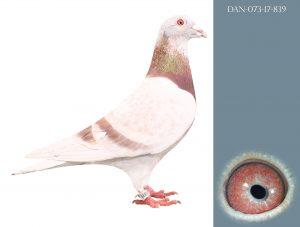 DAN073-17-839  100% Janssen