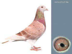 DAN073-17-916 100% Janssen