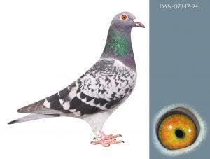 DAN073-17-941 100% Janssen