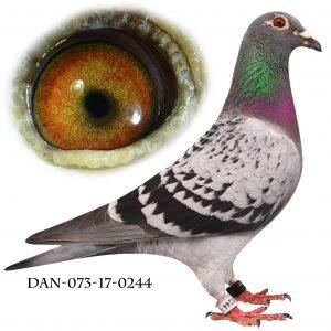DAN073-17-244 Brøbech