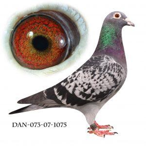 DAN073-07-1075 Brøbech lang