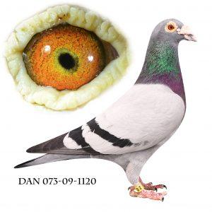 DAN073-09-1120 Dobbelt barnebarn af 632