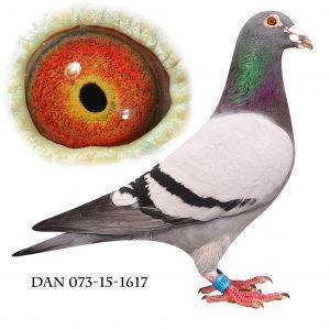 DAN073-15-1617 Flor Engels. Sektionsvinder Åbenrå