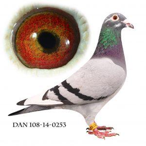 DAN108-14-253 Flor Engels Brøbech. Super avlshun